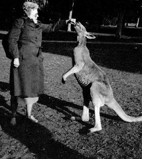 betty lane and kangaroo